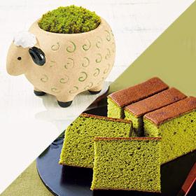 ひつじの苔盆栽と長崎堂抹茶カステーラ