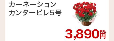 カーネーション カンタービレ 花のみ
