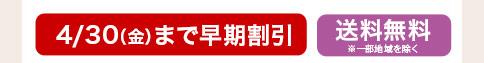 カーネーション カンタービレ 4月30日まで早期割引 送料無料
