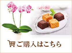お花&プチケーキ