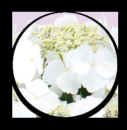 お花の特長