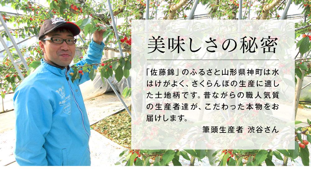 さくらんぼ職人の佐藤錦のおいしさのヒミツ