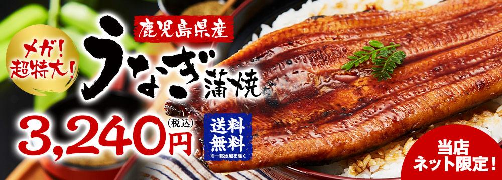 ≪お中元ギフト≫メガ!超特大!鹿児島県産うなぎ蒲焼き1尾