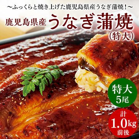 鹿児島県産うなぎ蒲焼(特大) 5尾