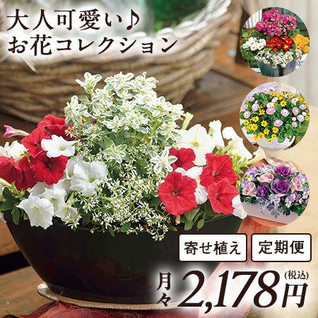 大人可愛い♪お花コレクション 定期コース(継続)