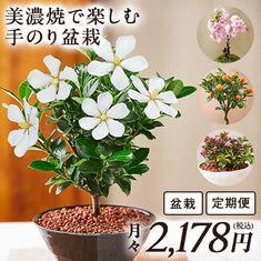 美濃焼で楽しむ手のり盆栽 定期コース(継続)