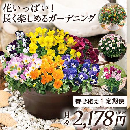 花いっぱい!長く楽しめるガーデニング 定期コース(継続)